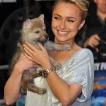 Hayden-Panettiere-cucciolo-cane